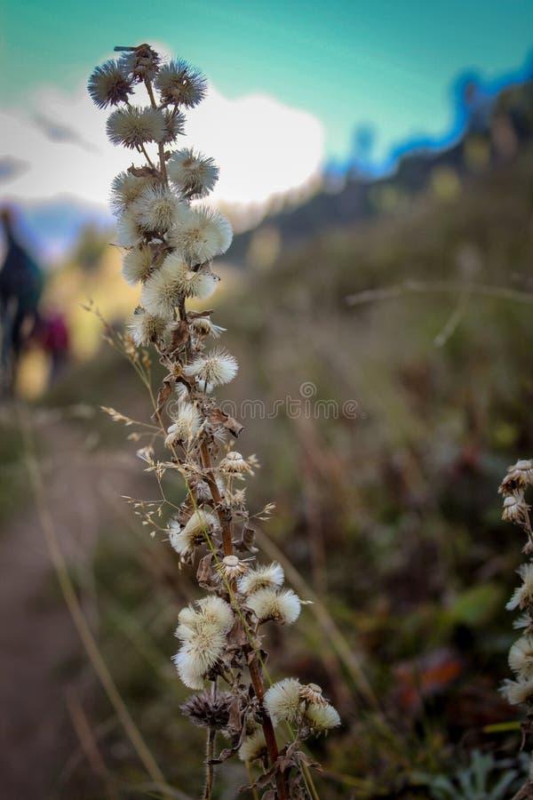Natur-Schönheit von Himachal Pradesh, Indien lizenzfreies stockfoto