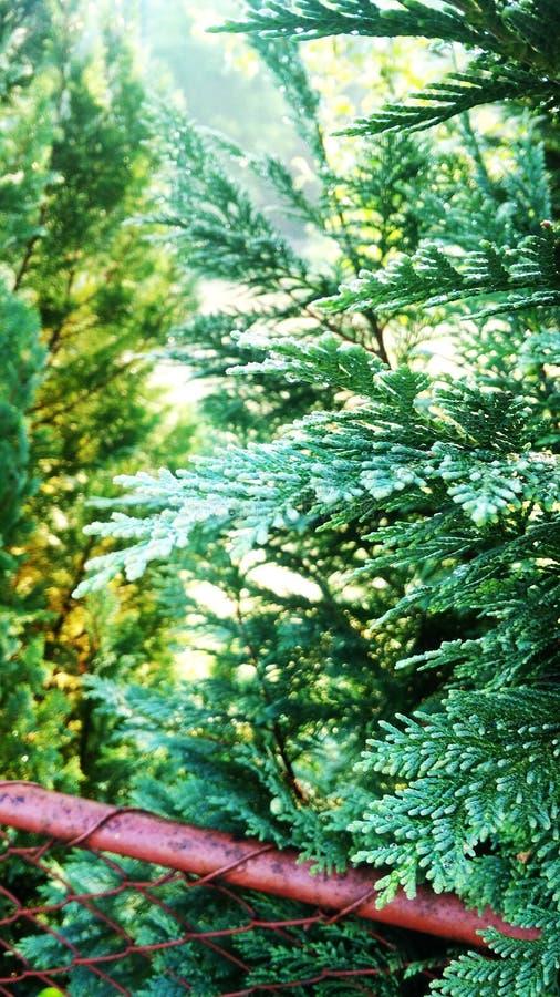 Natur, in seiner wahren Pracht lizenzfreie stockfotografie