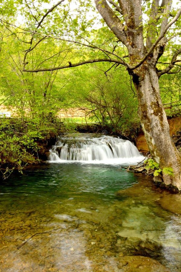 natur serbia arkivfoton