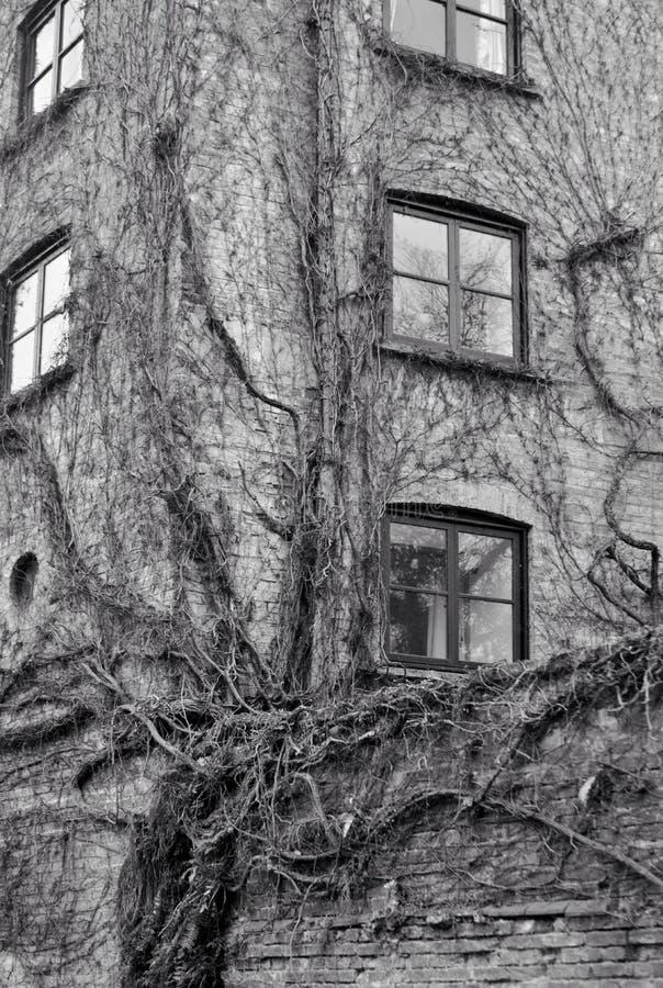 Natur som tar över arkitektur royaltyfri fotografi