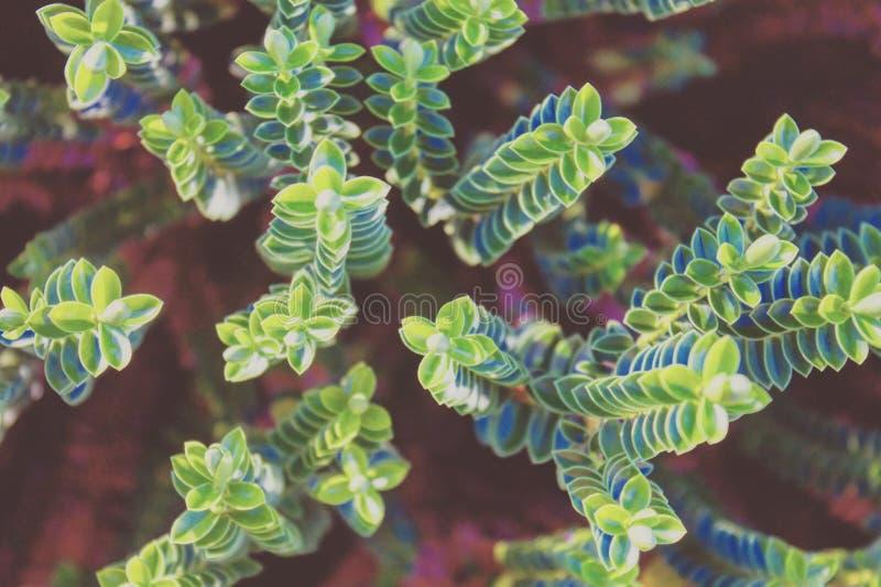 Natur spornt an lizenzfreie stockfotografie