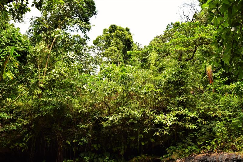 Natur Subic Bay Philippinen EL Kabayo lizenzfreie stockfotografie