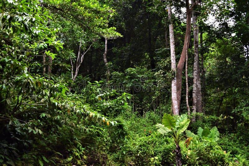 Natur Subic Bay Philippinen EL Kabayo lizenzfreies stockfoto