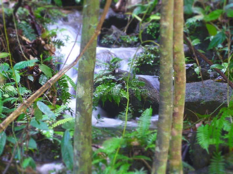 Natur in Thailand lizenzfreies stockbild