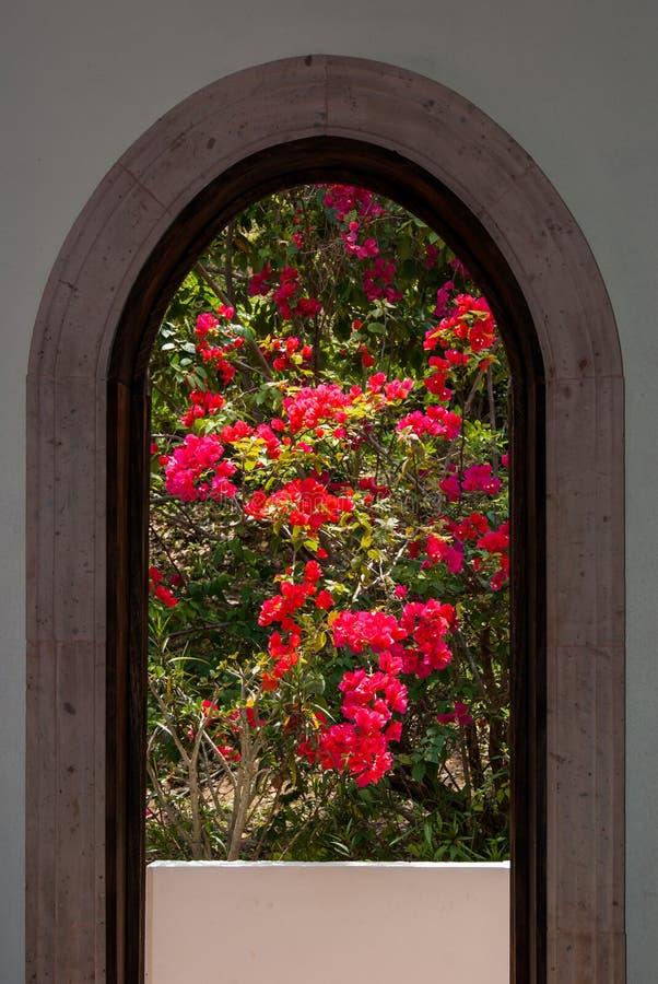 natur till fönstret fotografering för bildbyråer
