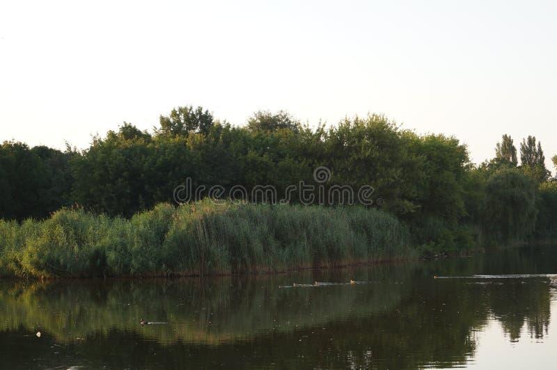 Natur Vatten Vatten E solros för closeupnaturstycke r hastigheter arkivfoto