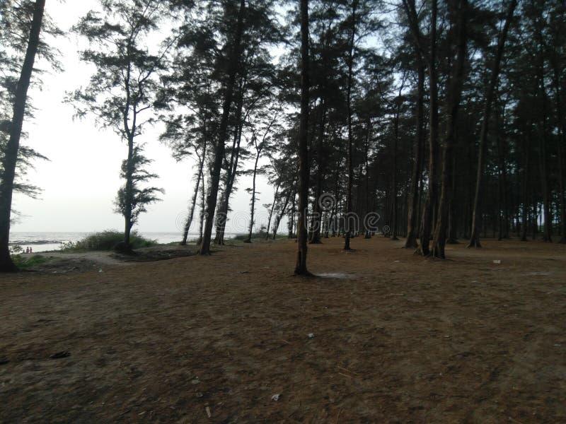 Natur vid strandsidan royaltyfri foto