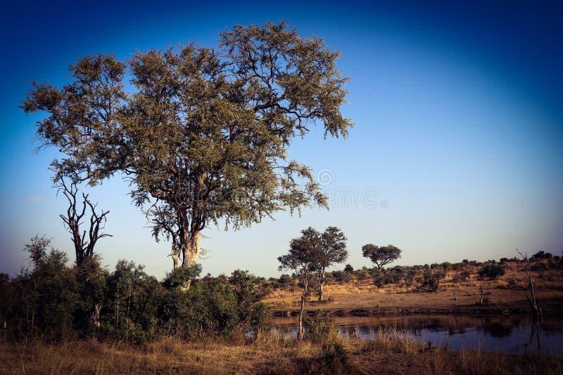 Natur arkivfoton