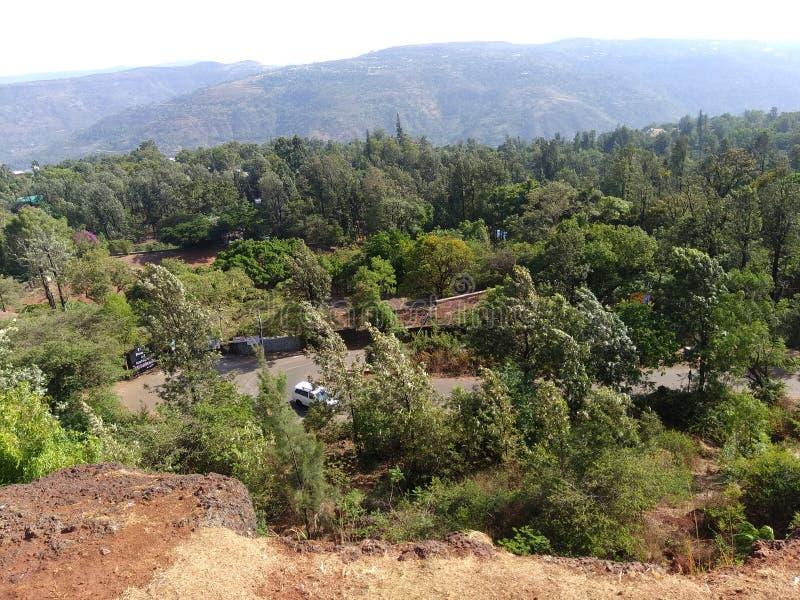Natur vom Berg u. vom Grün des Waldes stockbilder