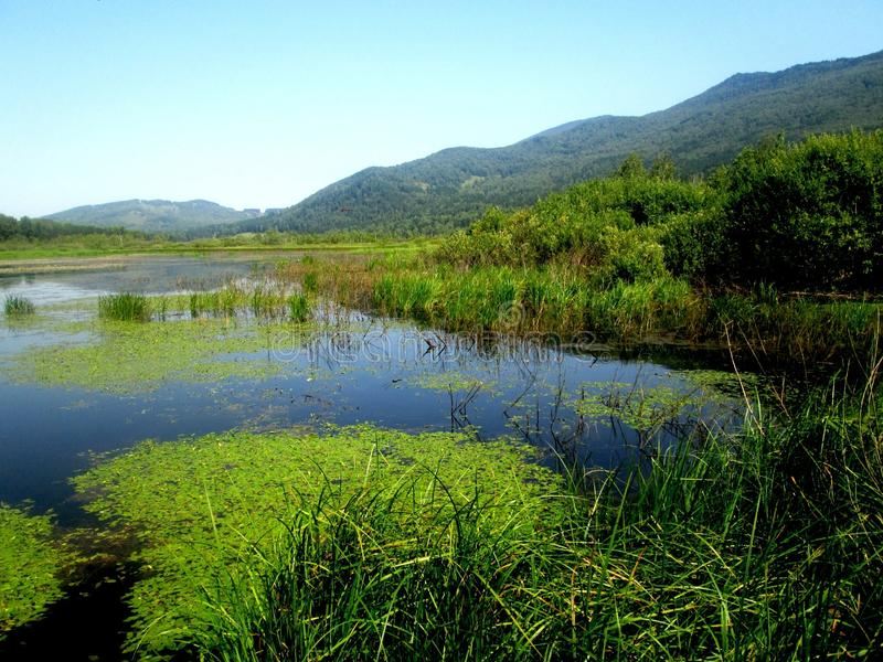 Natur von Altai lizenzfreie stockfotografie