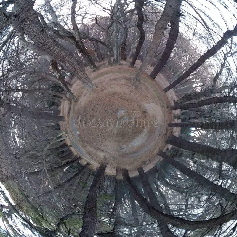 Natur vriden olik skogtunnel fotografering för bildbyråer