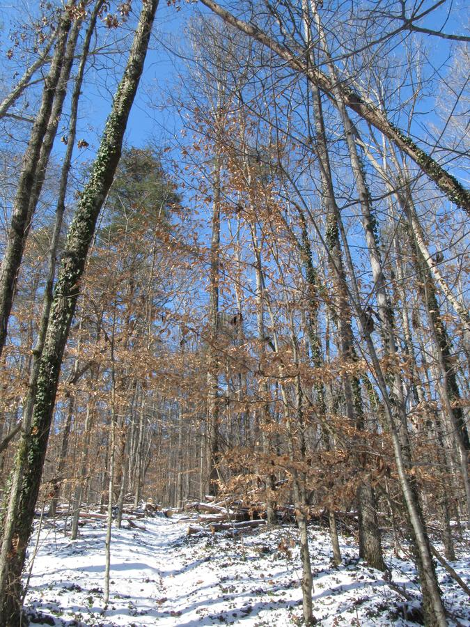 Natur-Weg im Winter lizenzfreies stockfoto