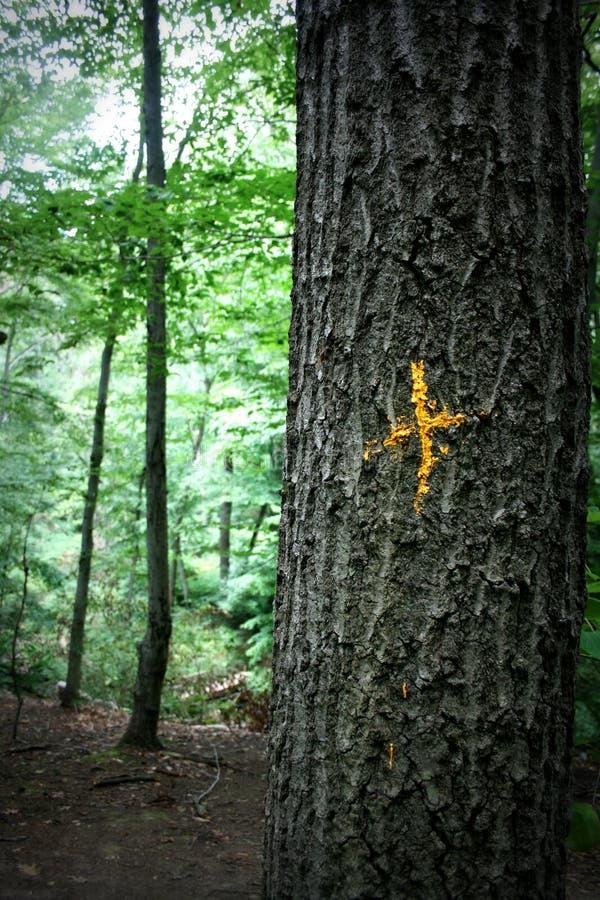 Natura ślad Zaznaczający z złoto krzyżem zdjęcie stock