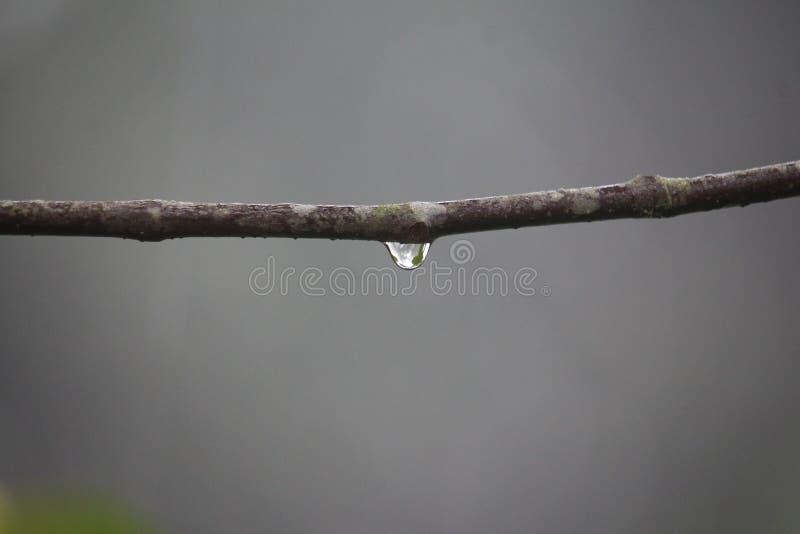 Natura obraz stock