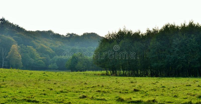 Natura zdjęcia royalty free