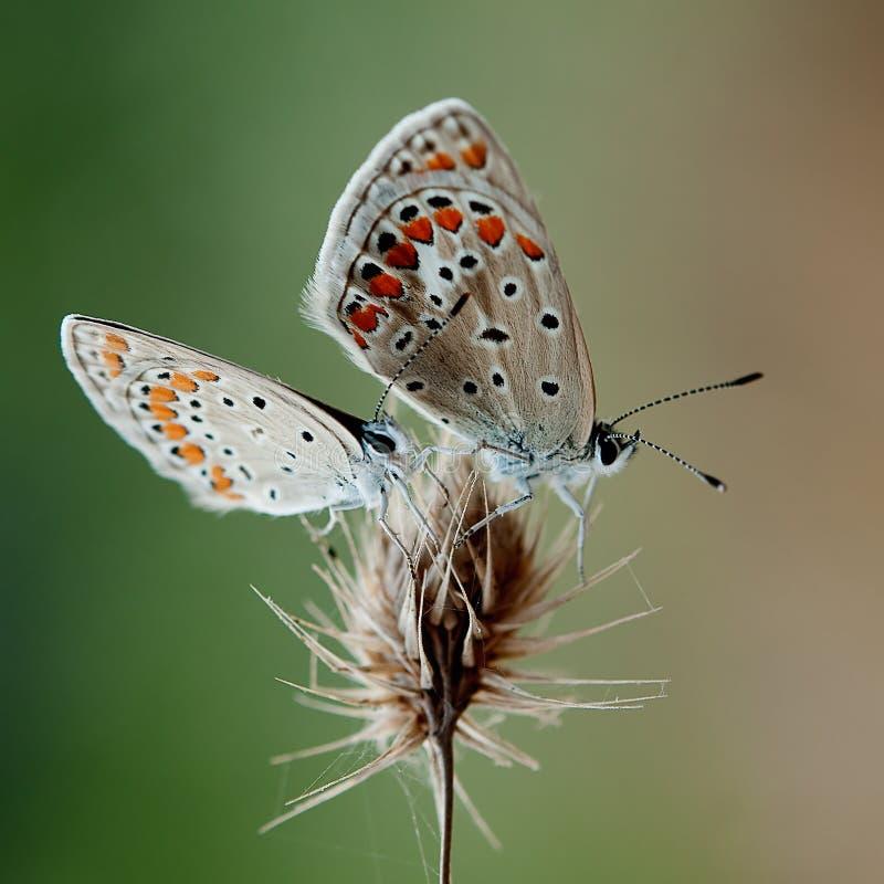 In natura fotografia stock