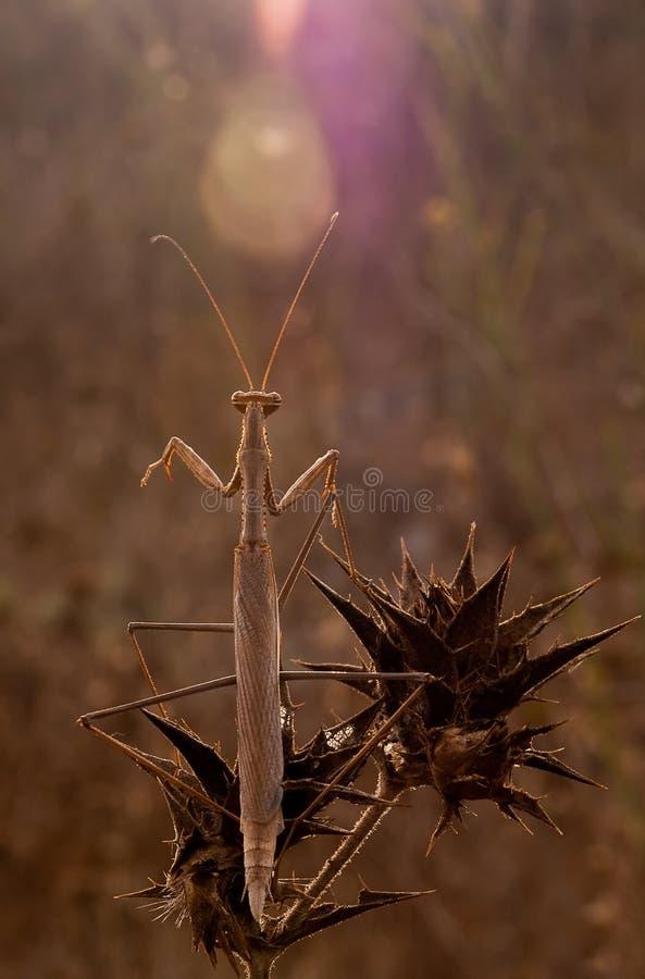 In natura fotografia stock libera da diritti