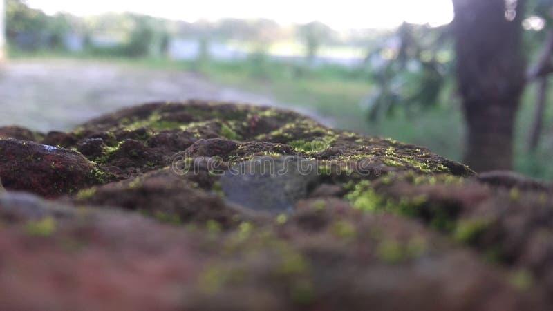 Natura obrazy stock