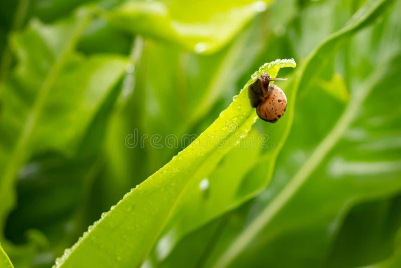 Natura, animale, esotica, concetto fotografie stock