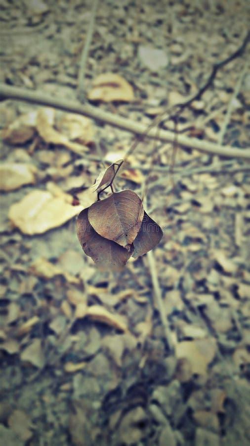 Natura arrugginita fotografia stock libera da diritti
