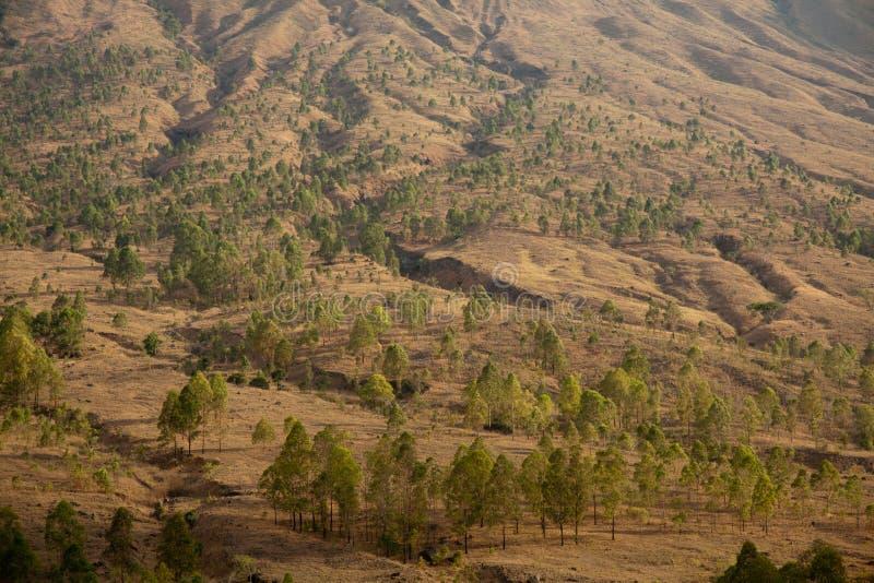 natura asciutta sull'isola del Flores sul fondo di un vulcano immagine stock
