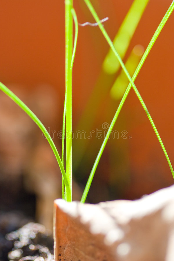 Natura astratta fotografia stock