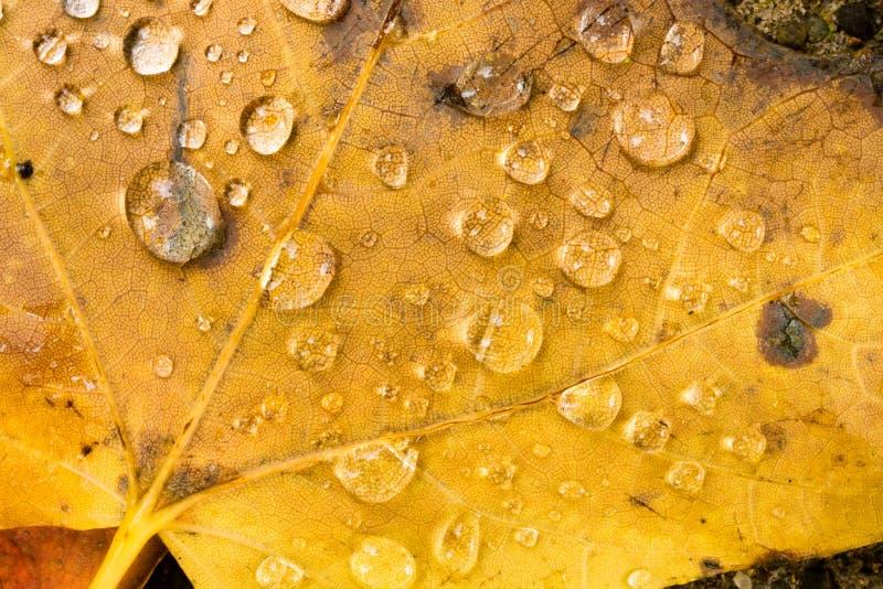 Natura Autumn Season Change Dew Drop a terra di inverno caduta foglie fotografie stock