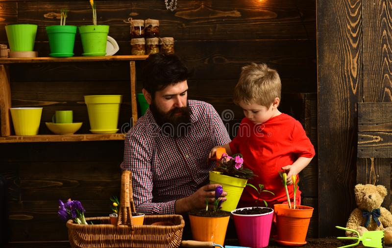 Natura barbuta di amore del bambino del ragazzino e dell'uomo Innaffiatura di cura del fiore Fertilizzanti del suolo giardinieri  fotografie stock libere da diritti