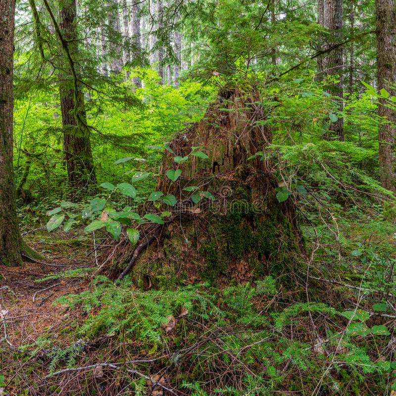 Natura bierze czas regrow zdjęcia stock