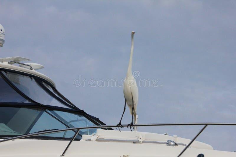 Natura blu dell'airone della spiaggia di Panama City immagine stock libera da diritti