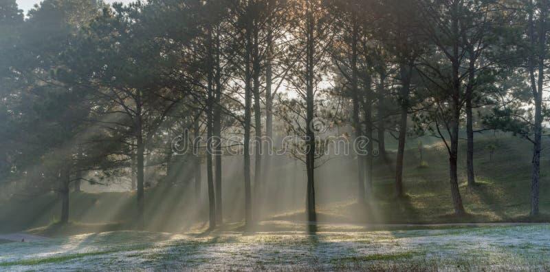 Natura con l'erba leggera e verde magica dei raggi di sole, del sole, parte 19 del prato fotografie stock libere da diritti