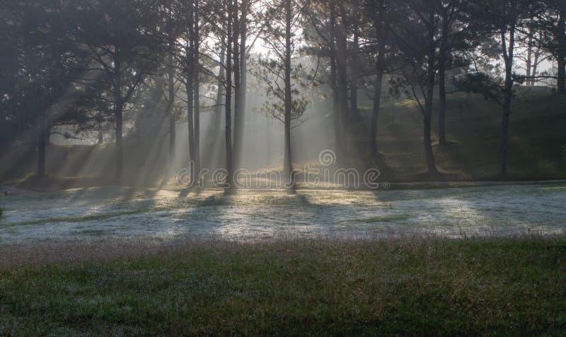 Natura con l'erba leggera e verde magica dei raggi di sole, del sole, parte 18 del prato fotografie stock libere da diritti