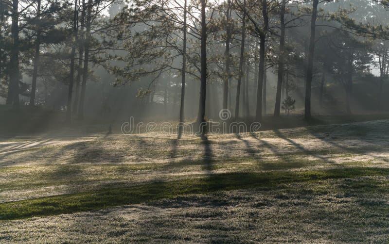 Natura con l'erba leggera e verde magica dei raggi di sole, del sole, parte 16 del prato immagini stock