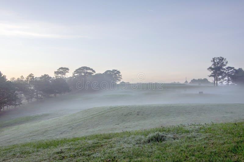 Natura con l'erba leggera e verde magica dei raggi di sole, del sole, parte 12 del prato fotografia stock libera da diritti