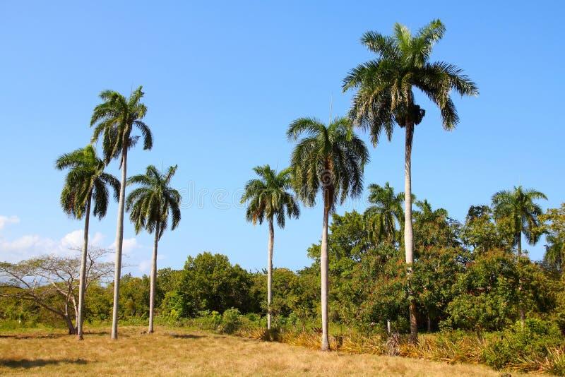 Natura in Cuba immagini stock libere da diritti