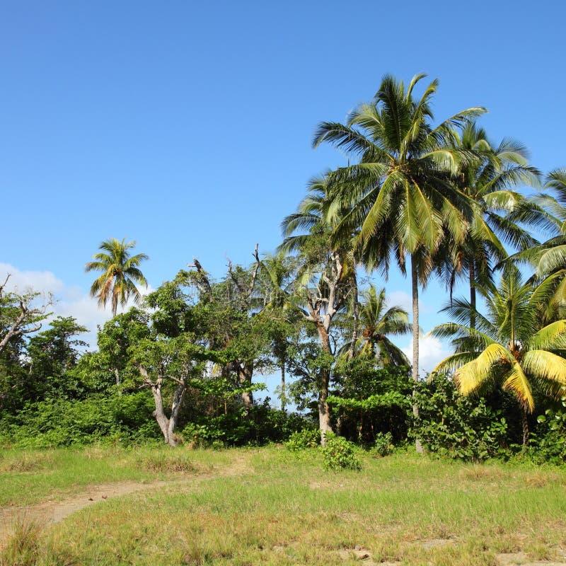 Natura in Cuba fotografia stock