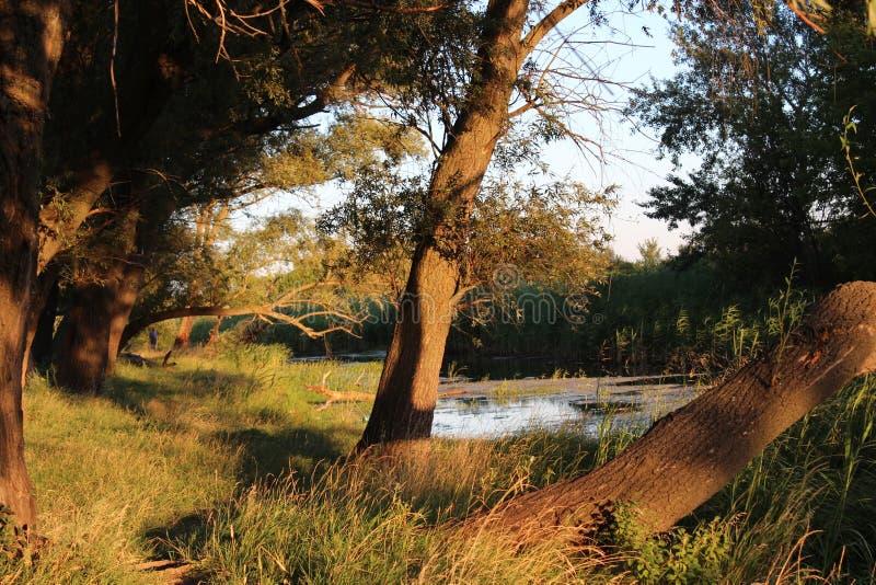 Natura del cielo di estate della vegetazione del fiume dell'albero di tramonto fotografie stock