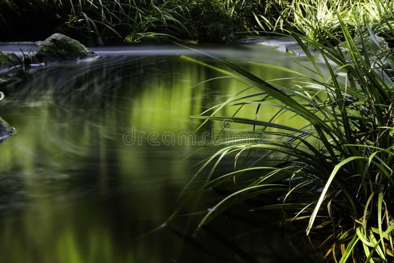 Natura del fondo del fiume immagine stock libera da diritti