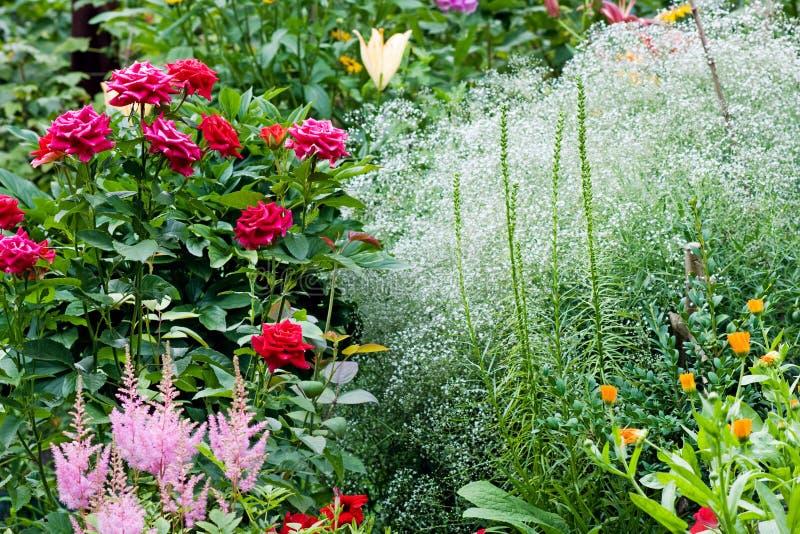 natura del giardino immagine stock