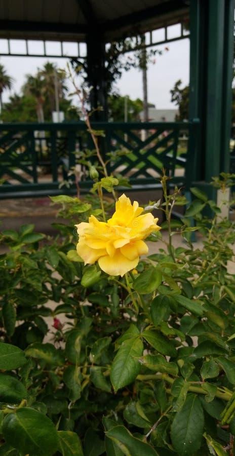 Natura del parco di Rosa immagine stock libera da diritti