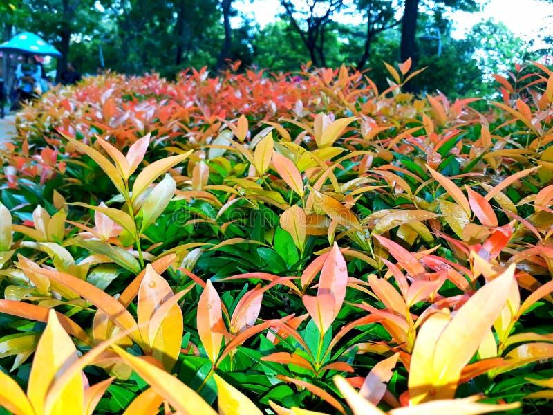Natura del parco del fiore fotografia stock