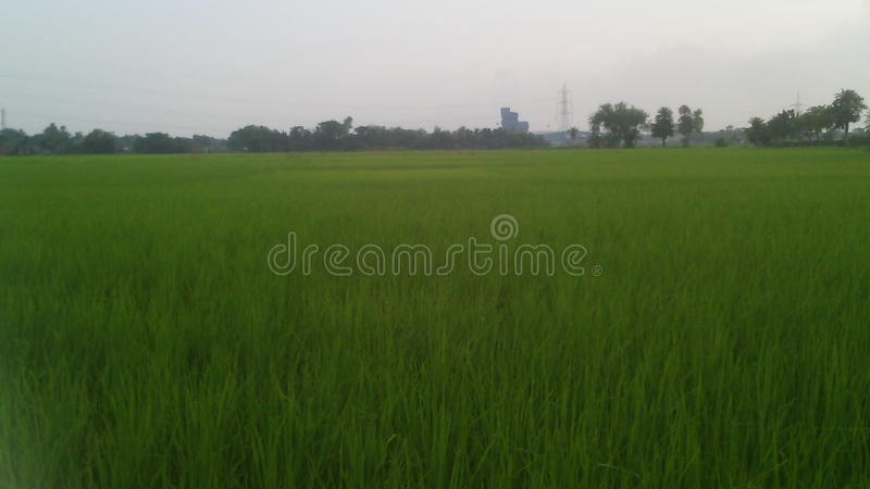 Natura del posto per vedere l'India il mio cantry fotografie stock libere da diritti