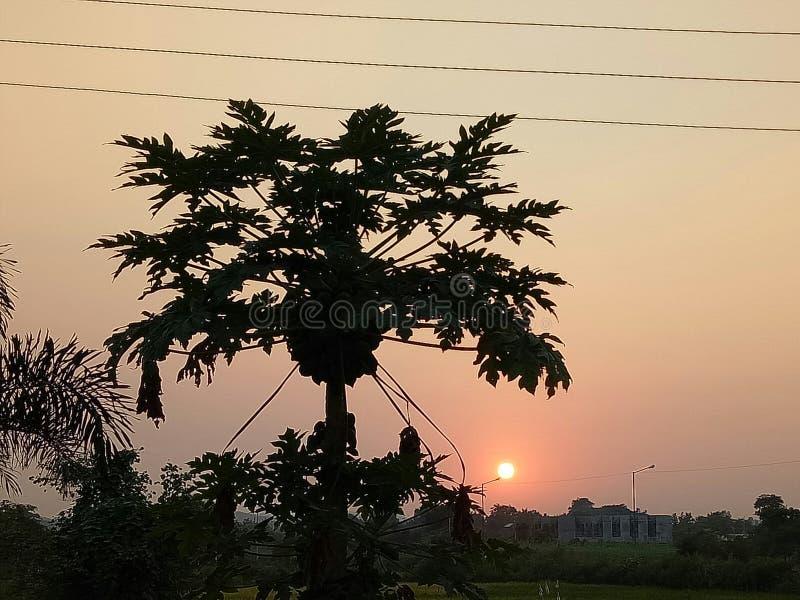 Natura del punto di tramonto di bellezza con l'albero fotografia stock libera da diritti