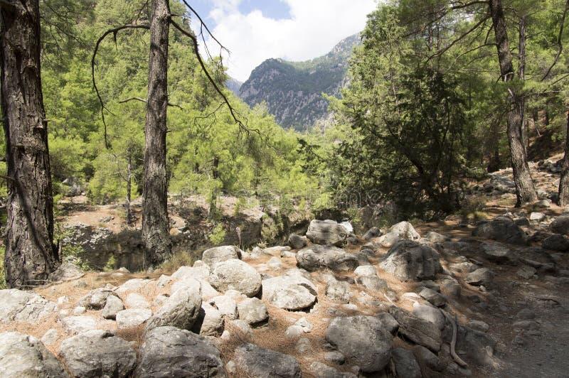 Natura dell'isola di Creta, giorno di estate soleggiato, modo di pietra immagine stock