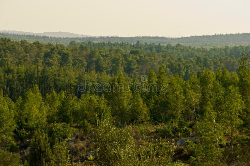 Natura dell'Israele. fotografie stock libere da diritti
