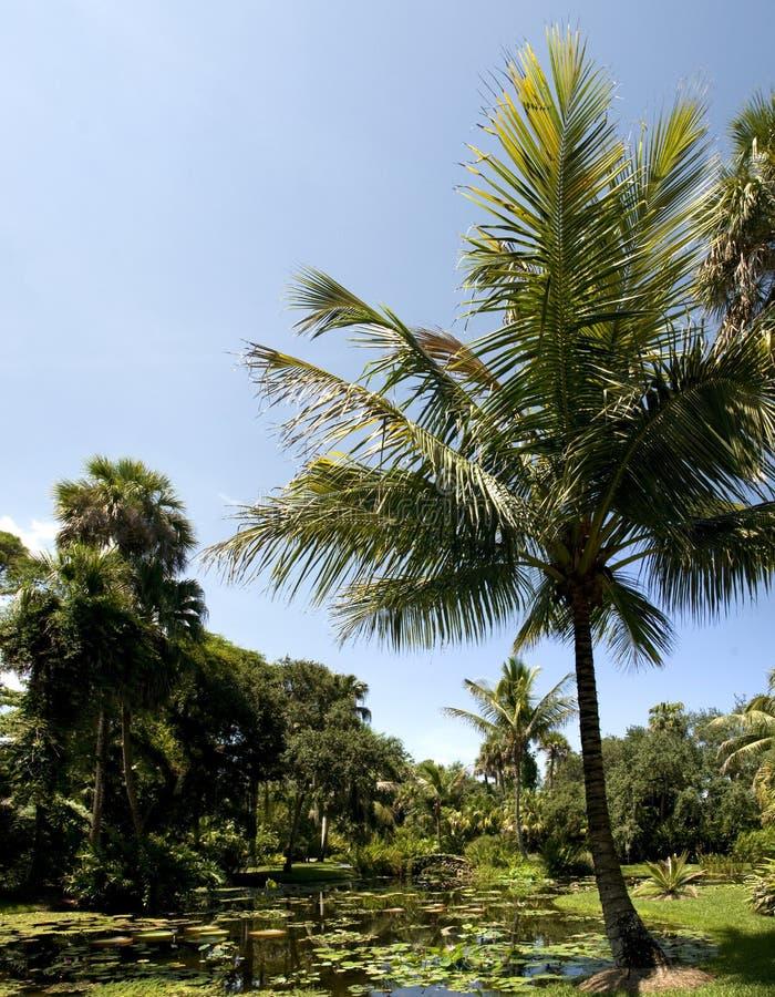 Natura della Florida fotografia stock