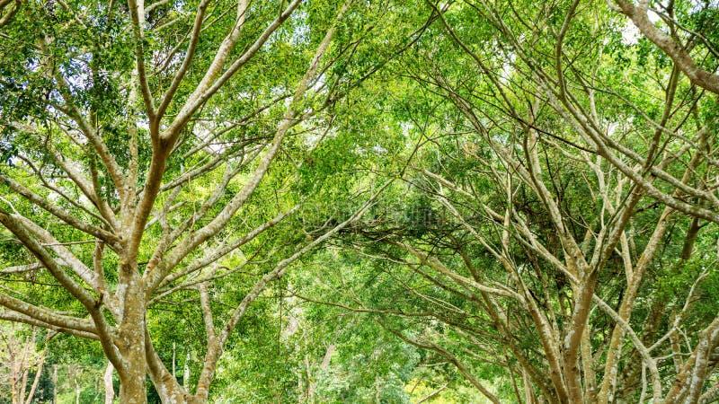 Natura della foresta fotografie stock libere da diritti