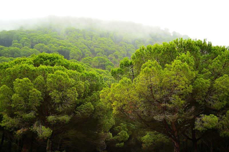 Natura della foresta della Spagna fotografie stock libere da diritti