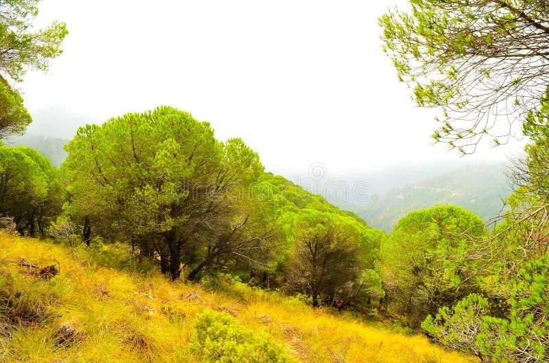 Natura della foresta della Spagna immagine stock