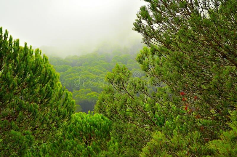 Natura della foresta della Spagna fotografia stock